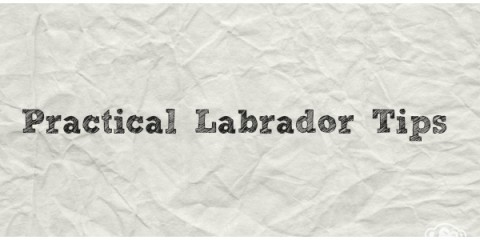 It's a Lab Thing Practical Labrador Tips