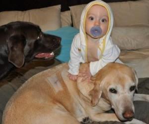 [Dear Labby] Will My Labrador Adjust to a New Baby