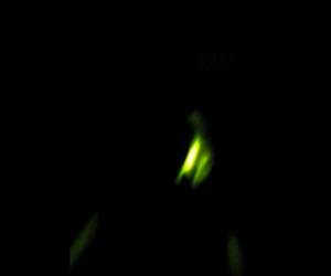 [LABtv Video] Labrador Martians?? It's a Lab Thing