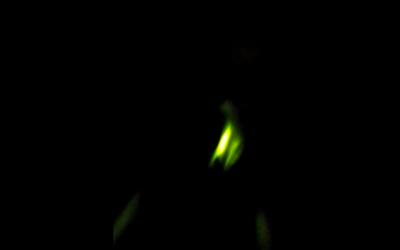 It's a Lab Thing Labrador Martians Glow in the Dark Collars Glowdoggie