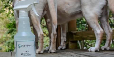 Natural Organic Flea Tick Control Wondercide It's a Lab Thing Labrador-14
