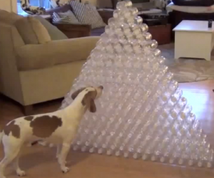 1 Dog + 210 Water Bottles = One Heck of a Christmas Present