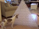 Cute_Dog_Video_Labrador_playing_with_empty_water_bottles