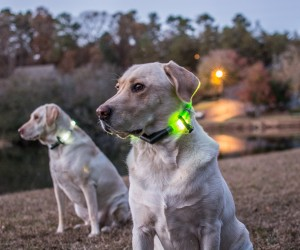 Lighted Waterproof LED Dog Collars by Glowdoggie