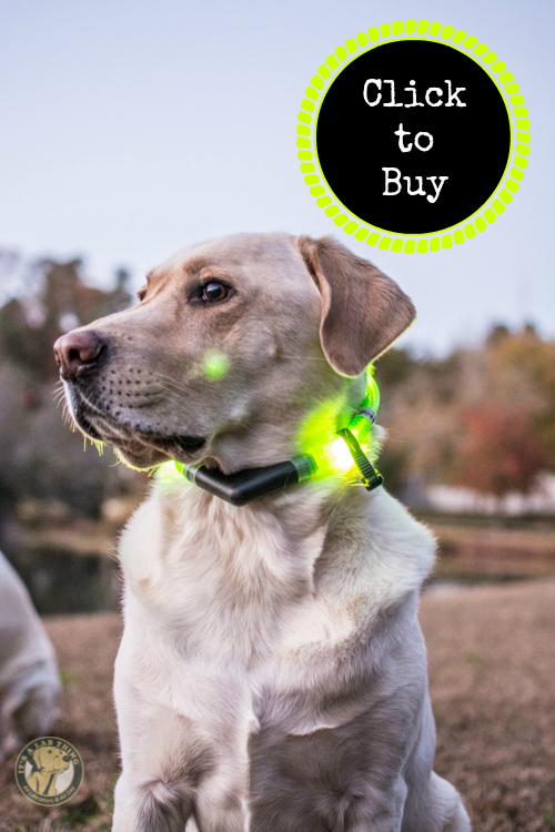 Glowdoggie LED waterproof Collars for Labradors and Dogs buy