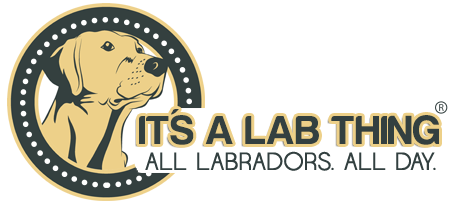It's a Lab Thing logo