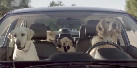 Subaru_Dogs_in_Car_Barking_at_Mail_man_Labrador_golden_Retriever_Video