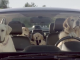 Subaru_Dogs_in_Car_Barking_at_Mail_man_Labrador_golden_Retriever_Video