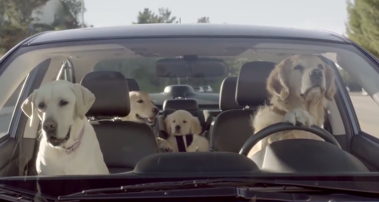 "LABtv Video: Subaru's ""If Dogs Could Drive"" Commercial Nails It"