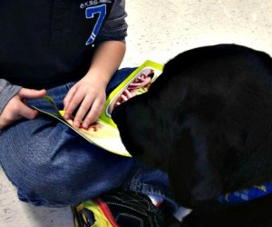 Sampson: A Rescue Labrador Helping Give the Gift of Reading