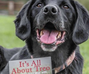 Treo: Highly Decorated Labrador Mix of the British Army