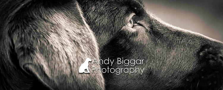 Dog-Photography-Labradors-Andy-Biggar-006