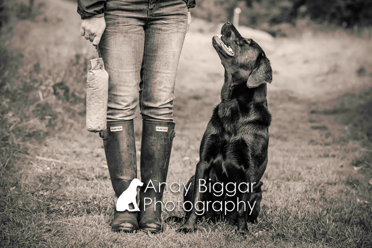 Dog-Photography-Labradors-Andy-Biggar-008