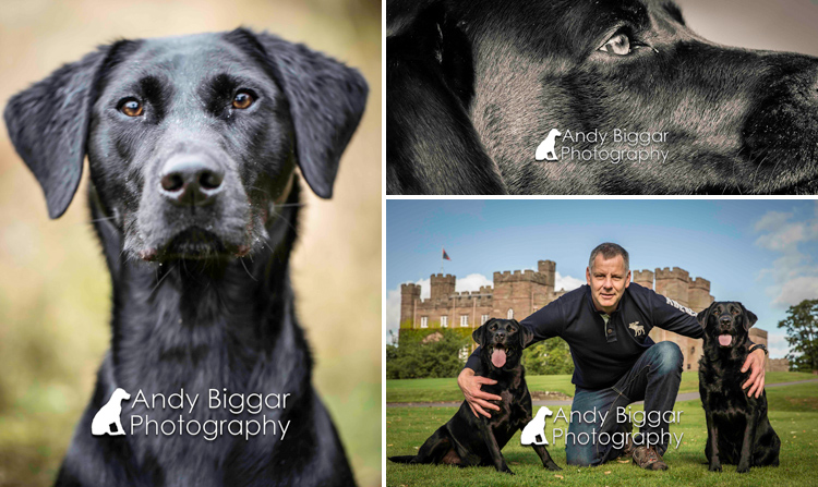 Dog-Photography-Labradors-Andy-Biggar-011