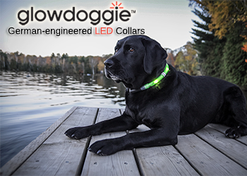 Glowdoggie-Led-Lighted-collars-for-dogs-and-labradors-350x250