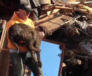 Chocolate Labrador Saved from Mud Slide