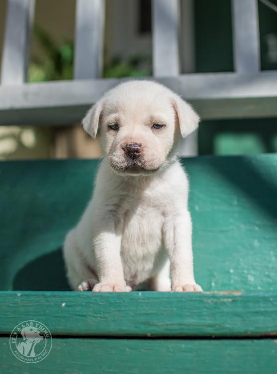 Labrador Rescue Jasper-35
