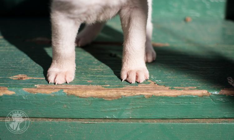 Labrador Rescue Jasper-38