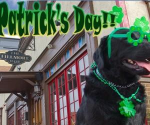 St. Patrick's Day Lab Fan Labradors