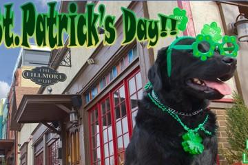 St.-Patrick's-day-labradors