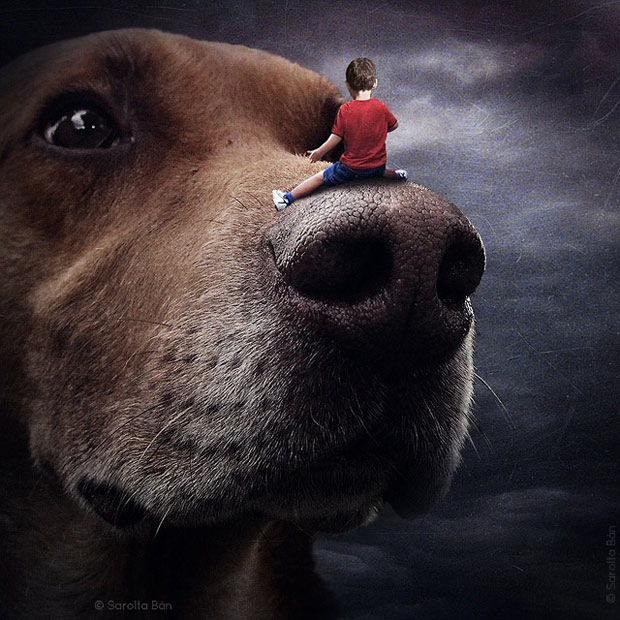 Shelter pets star in surreal portraits in an attempt to find homes Labrador 1