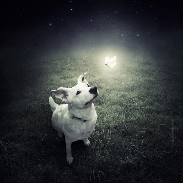 Shelter pets star in surreal portraits in an attempt to find homes Labrador 2