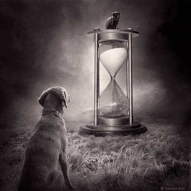 Shelter pets star in surreal portraits in an attempt to find homes Labrador 3