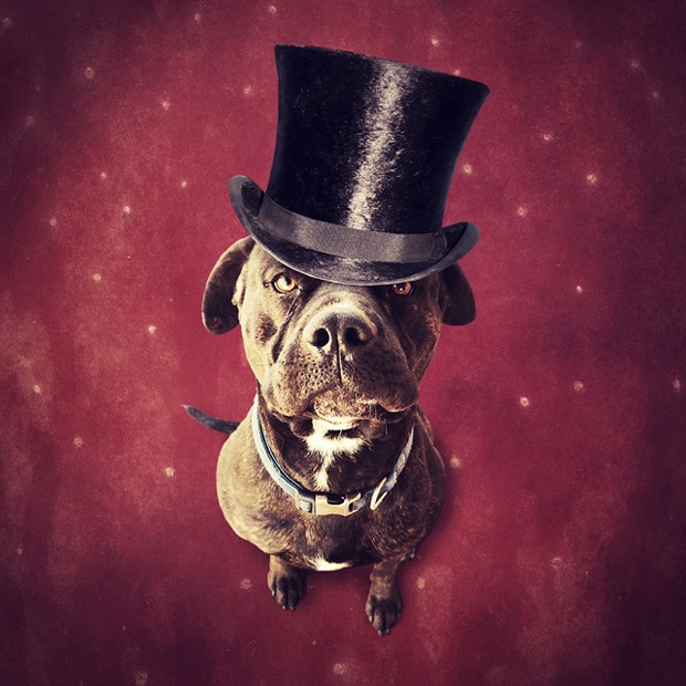 Shelter pets star in surreal portraits in an attempt to find homes Labrador 7