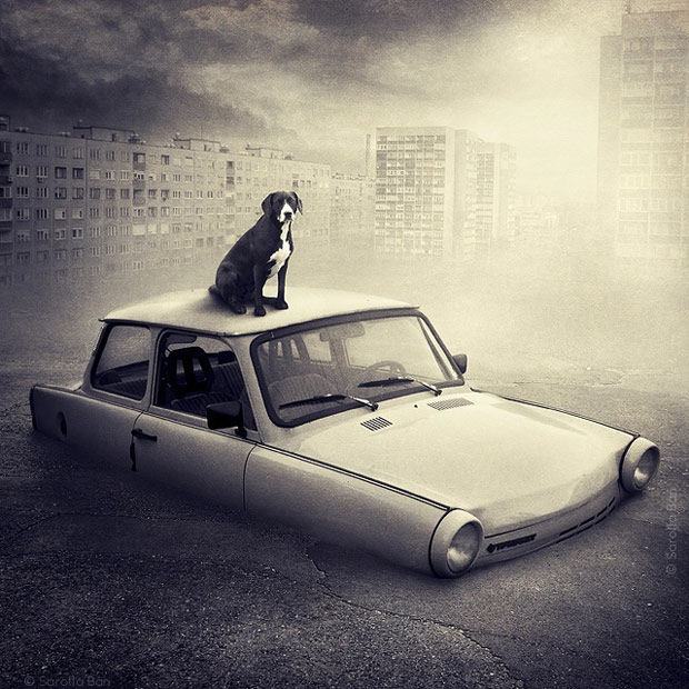 Shelter pets star in surreal portraits in an attempt to find homes Labrador 8