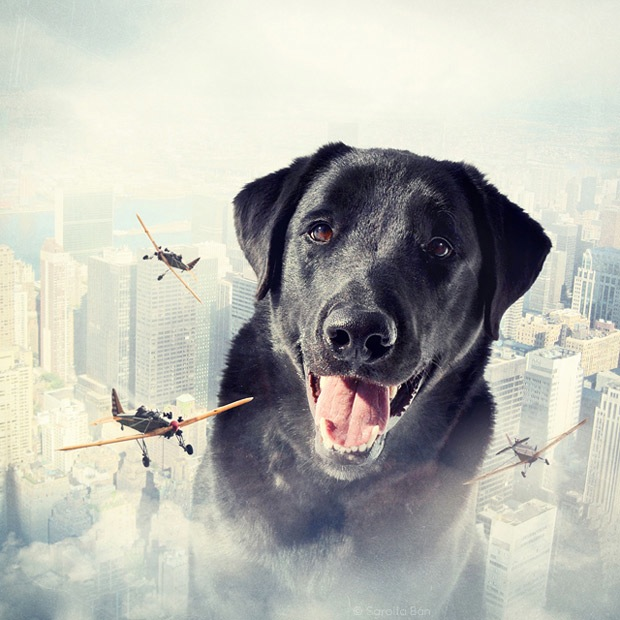 Shelter pets star in surreal portraits in an attempt to find homes Labrador