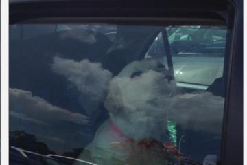 Labrador stuck in car at water park saved