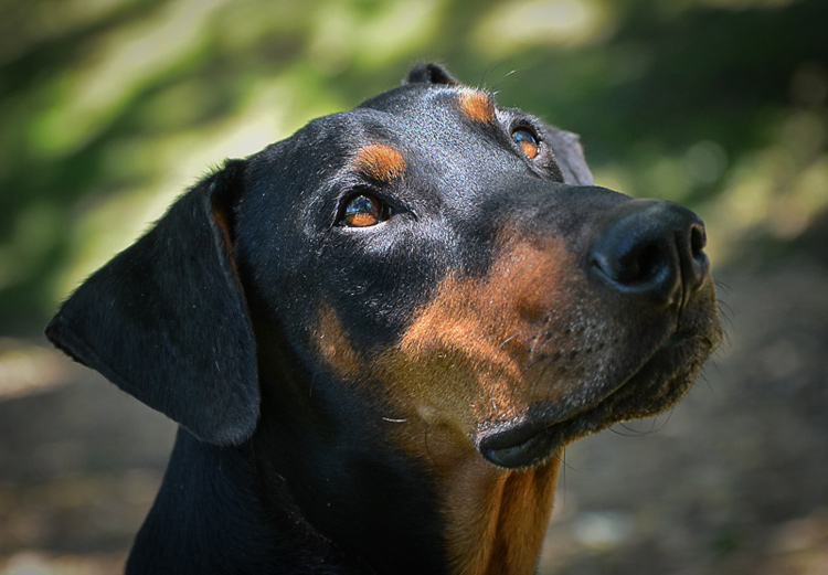 Dog Photography classes Andy Biggar It's a Lab Thing FotoCoach Atlanta Labradors (11)