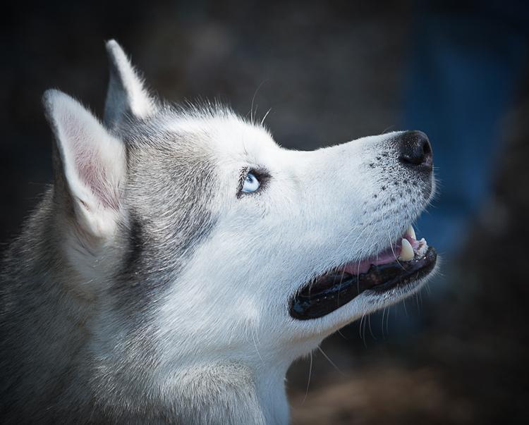 Dog Photography classes Andy Biggar It's a Lab Thing FotoCoach Atlanta Labradors (2)