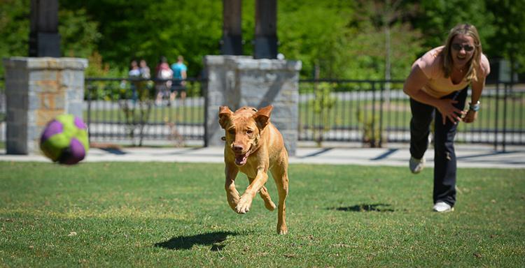 Dog Photography classes Andy Biggar It's a Lab Thing FotoCoach Atlanta Labradors (5)