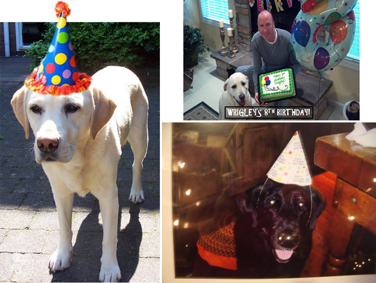Labrador Dog Birthdays Hat celebrations (15)