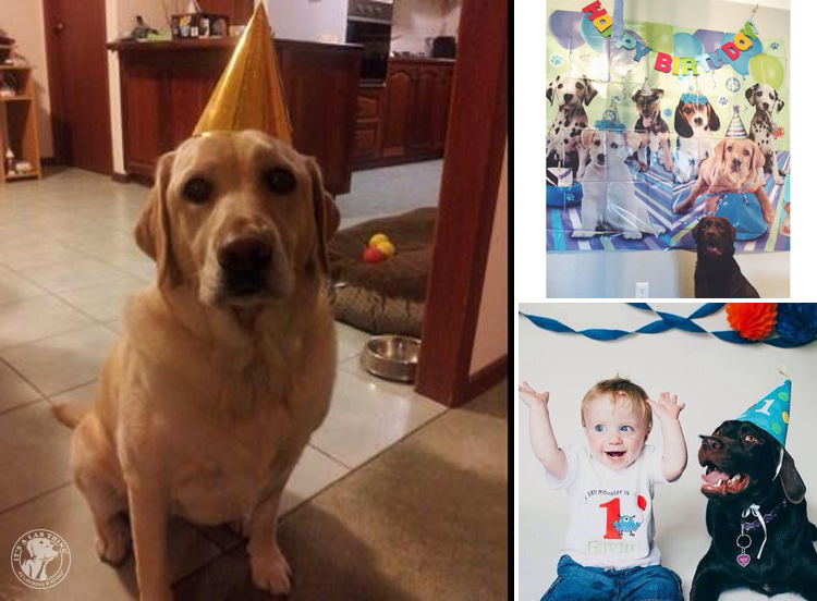 Labrador Dog Birthdays Hat celebrations (20)