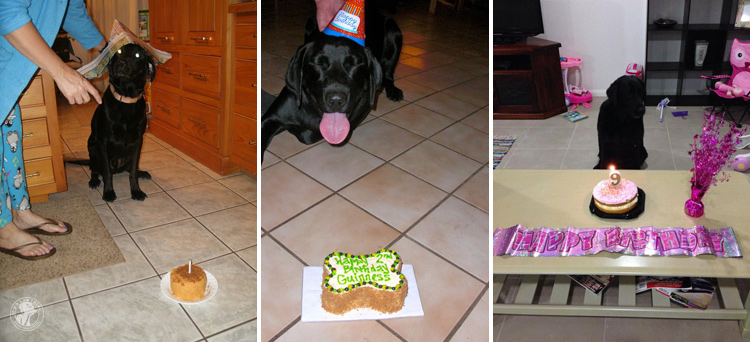 Labrador Dog Birthdays Hat celebrations (5)