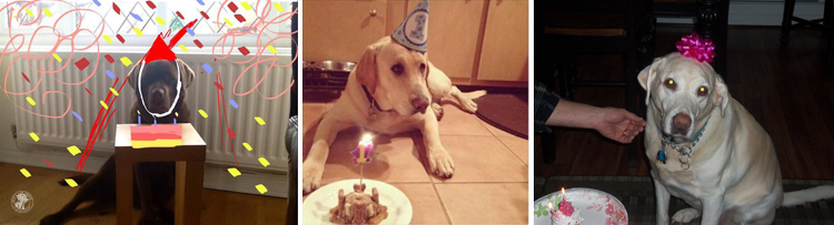Labrador Dog Birthdays Hat celebrations (7)