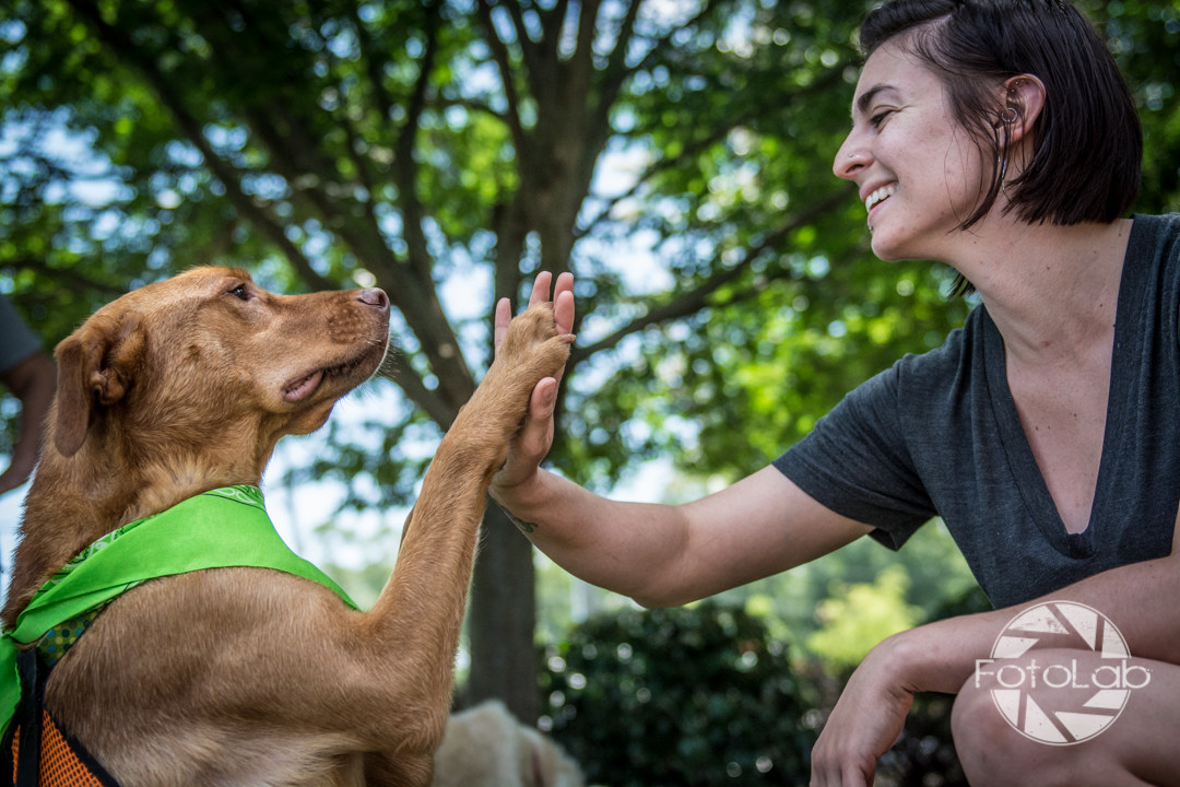 Labrador Friends of the South Adoption Day 6-14-117