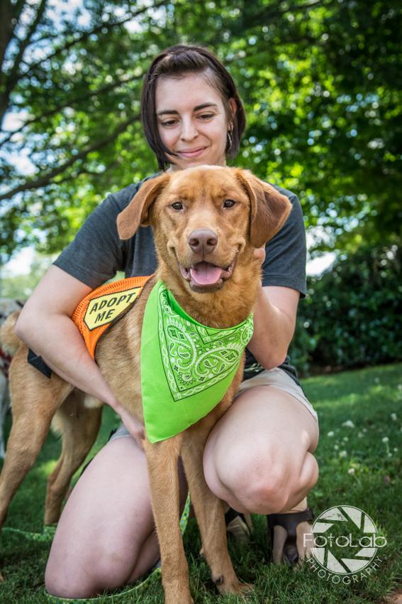 Labrador Friends of the South Adoption Day 6-14-124