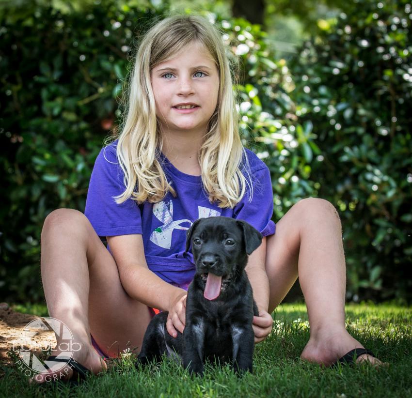 Labrador Friends of the South Adoption Day 6-14-164