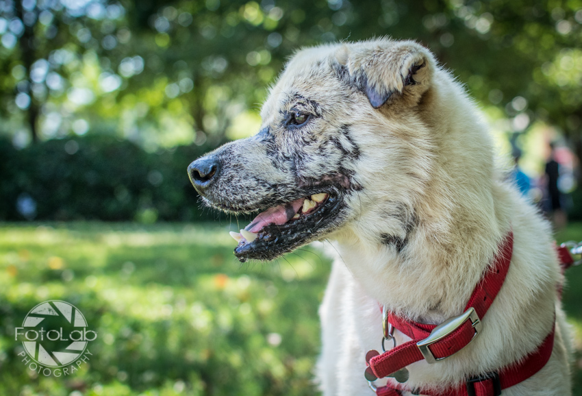 Labrador Friends of the South Adoption Day 6-14-6