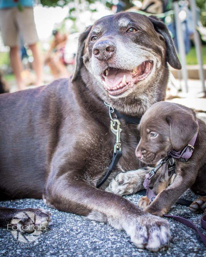 Labrador Friends of the South Adoption Day 6-14-69