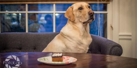 Birthday cake for labrador Brody Bday-1-2