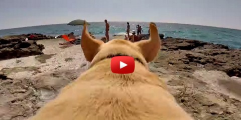 Labrador Dog running to the Beach water on Go Pro Camera