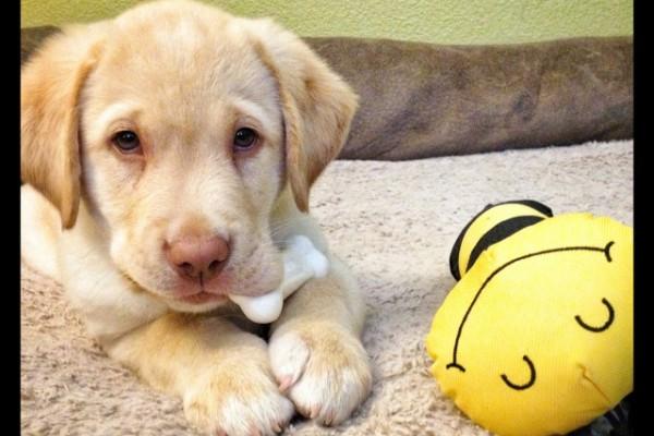 Liz-Kover-Dog-Trainer-Good-Dog-Autism-Companions-baby Fred