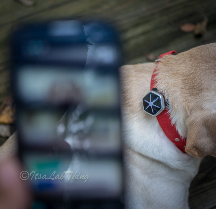 Starwalk Dog Activity  Tracker It's a Lab Thing Review-13