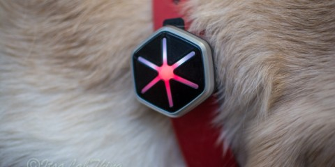 Starwalk Dog Activity  Tracker It's a Lab Thing Review-9