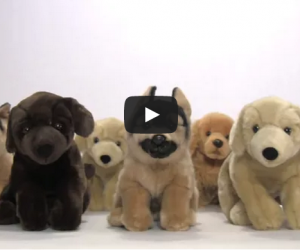 Impactful Video On Where Not to Get Your Puppy