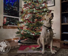 001-Christmas-Holiday-Labrador-Retrievers-Presents-Santa-